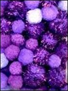 PomPom set 50 stuks Purple glamour mix