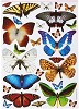 Anita's stansvel A4 Flutterdies Toppers - Metallic Tropical